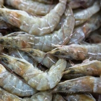 abu-dhabi-fish-market