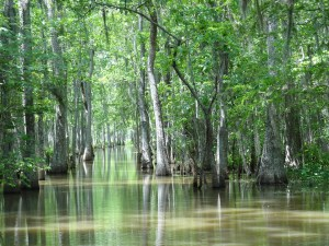 Louisiana-swamp.jpg