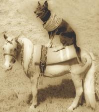 dog-pony-sepiacropped