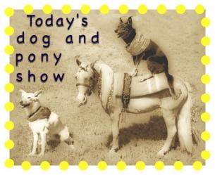 Dog-pony.jpg