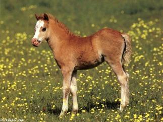 pony-wallpapers1
