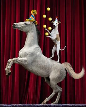 dog-pony-juggle