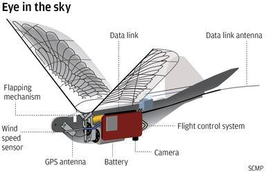 bird-drone.jpeg
