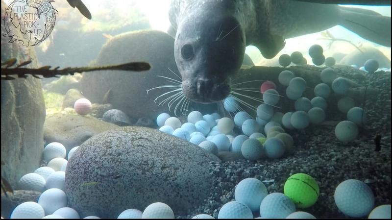 seal-golfball