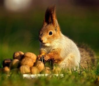 squirrel.jpeg